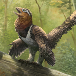 Balaur bondoc is a Bird